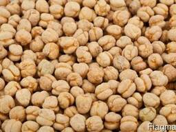 Greenfield Incorporation sells Chickpea /wholesale/ - photo 1