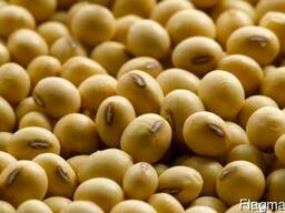 Greenfield Incorporation sells Soybean /wholesale/