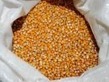 수확 2020. 사료 옥수수, 분쇄 옥수수. 도매 / 운송 배송 - фото 2