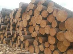 Cooperation:supply of material from the Siberian cedar. larh - photo 3