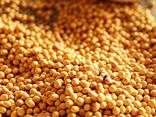 Soybeans - фото 1
